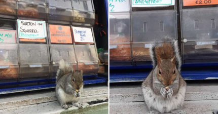 堅果店被「松鼠小偷」吃到怕 乾脆提供「免費吃到飽」損失反而下降!