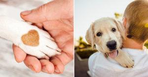 培訓師曝狗狗「把手放主人身上」有原因!超暖解答曝光:牠在說愛你❤