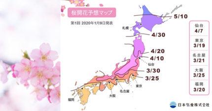 日公布「2020最強賞櫻攻略」櫻花迷注意 超詳細「時間地點」絕不撲空!