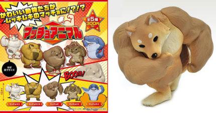 台灣也買得到!日本爆紅「筋肉動物」扭蛋化 貓咪款「超壯二頭肌」必收
