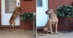 無良主人搬家後「把忠犬遺棄家門口」 毛孩堅持「在原地等」讓人心碎QQ