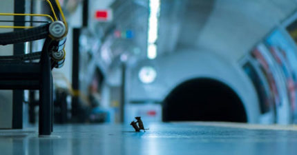 攝影師拍到「小老鼠打架」可愛畫面 超迷你版「火爆現場」拿英國人氣大獎!