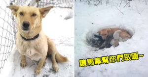 狗媽「在雪地挖洞穴」當庇護所 用肉身「幫寶寶取暖」畫面超感人!