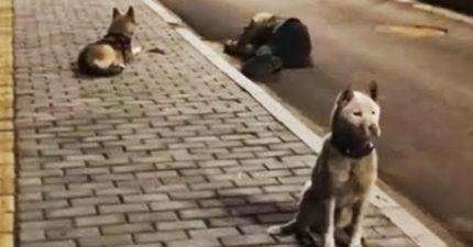 影/醉倒在路邊!忠犬一隻「顧手機」一狗「顧主人」 民眾:狗狗無奈又焦急