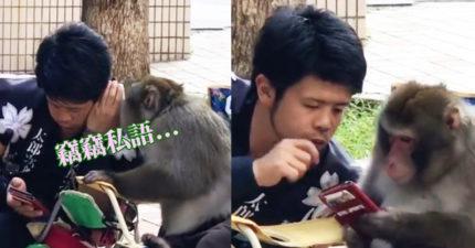影/猴子跟人類朋友「竊竊私語」互動超奇!你覺得他們在「看什麼說什麼」?