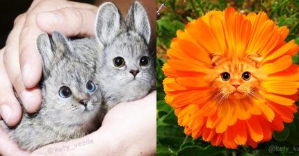 圖/你想讓「喵基因」佔領全球物種嗎?同意就乖乖按「愛心」