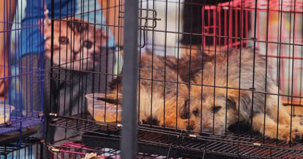 被疫情嚇到!深圳終於「禁止吃貓狗」動保團體感動:歷史性的一刻