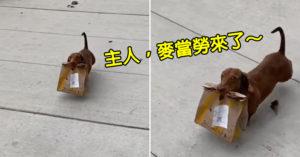 影/隔離期間臘腸犬「專業小短腿送麥當勞」路人還以為在偷東西
