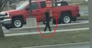 影/貴賓犬「假扮工讀生」站起來用2隻腳逛街 主人:很正常啊