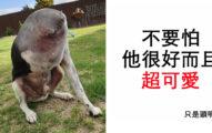 外國網友對這「無頭狗怪照」超看不懂...崩潰:頭到底在哪?