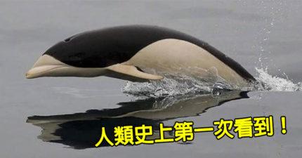 連名字都沒有!人類「首次看到」的神秘海豚 歷史僅文字記錄