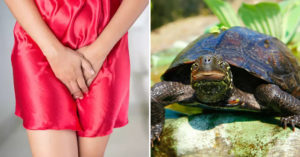 女子開趴後「肚子超痛」檢查發現裡面「塞了一隻烏龜」