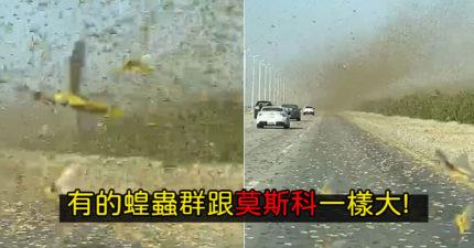 影/以為「沙塵暴」造成大塞車 近看發現下「蝗蟲暴雨」超震撼!