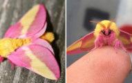 超夢幻「會飛的冰淇淋」第一次看到蛾開始餓肚子...