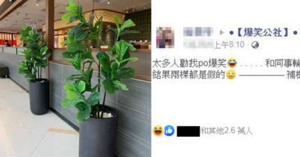 貼心照顧植物「一摸才發覺怪怪」 2個月感情全被糟蹋!