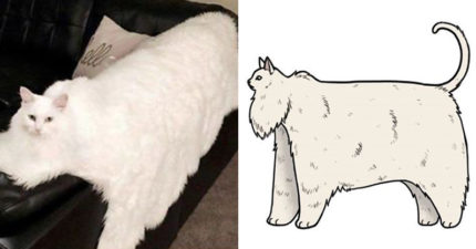 藝術家讓梗圖成真!「A&F肌肉貓男」其實根本就是獵奇媽寶