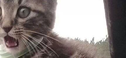 你覺得你很懂你的貓咪嗎?這就是這25個貓咪表情背後的情緒。