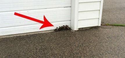 男子在屋外找到一群失去媽媽的小鴨子-590x200