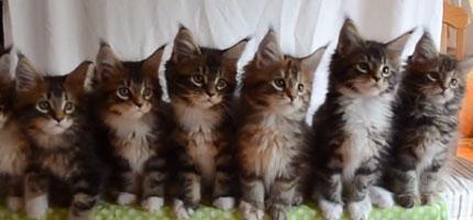 7隻貓咪同步
