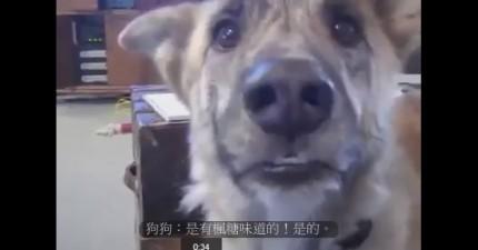 對狗狗的終極誘惑。會說話的可愛狗狗