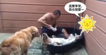 狗狗享受洗澡