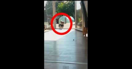 狗狗因為有透明門進不了房間