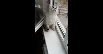 貓咪專注力超高