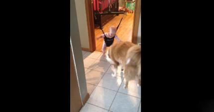 狗狗教小寶寶怎麼跳