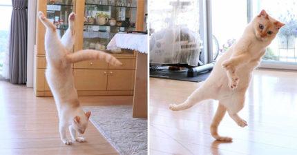 25張證明「貓皇是跳舞天才」的熱舞照 「地板動作」都完美駕馭