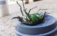 英國出現「神秘怪蟲」!靠近一看專家嚇呆:來源不單純