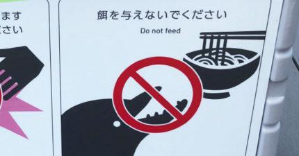 「禁止餵食海豚」圖示不單純 網看「地名」恍然大悟:只有烏龍麵