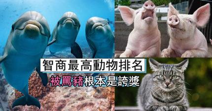 全球「最聰明動物」TOP 10 「第1名」智商快超越人類!