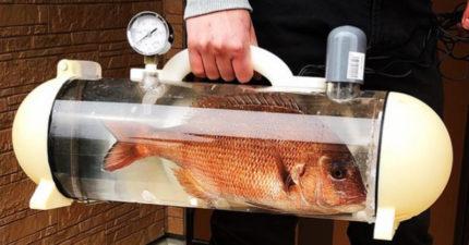「帶魚出門散步」不是夢?超狂發明「活魚包包」 網看影片驚:變生魚片了