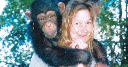 猩猩「當兒子養」14年 突然抓狂「吃掉她整張臉」